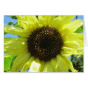 Card - Yellow Sunflower