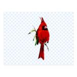 Cardan Cardinal Postcard