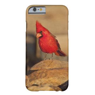 Cardenal, cardinalis del Richmondena, del sudeste Funda Para iPhone 6 Barely There