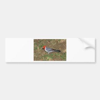 Cardenal con cresta rojo pegatina de parachoque