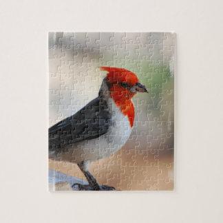 Cardenal con cresta rojo puzzle con fotos