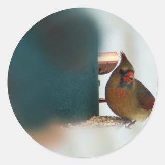 Cardenal de sexo femenino en Birdfeeder Pegatina Redonda