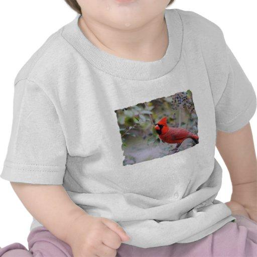 Cardenal de sexo masculino 3 camisetas
