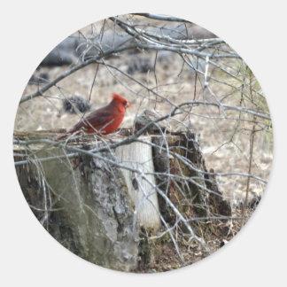 Cardenal de sexo masculino en un tocón de árbol pegatina redonda
