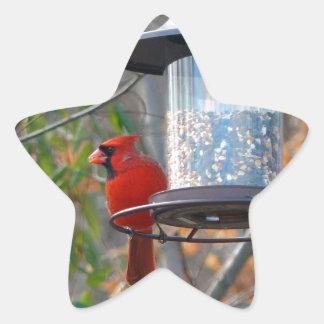 Cardenal de sexo masculino pegatina en forma de estrella