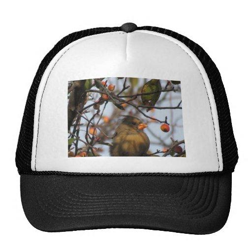 Cardenal del otoño gorras de camionero