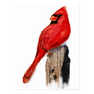 Cardenal en el poste tarjetas postales