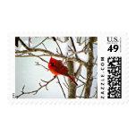 Cardenal en el sello de la nieve