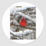 cardenal en invierno etiqueta redonda