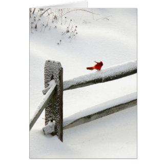 Cardenal en la cerca Nevado