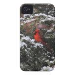 Cardenal en la nieve 2 iPhone 4 Case-Mate cobertura