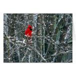Cardenal en nieve tarjetón