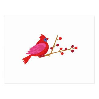 Cardenal en rama tarjetas postales