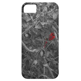 Cardenal en un árbol iPhone 5 fundas