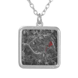 Cardenal en un collar del árbol
