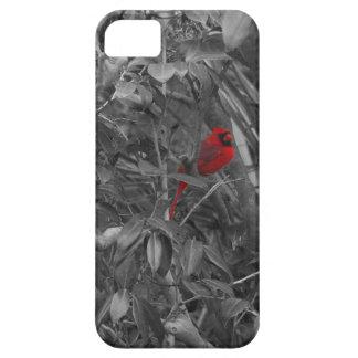 Cardenal en una caja del árbol iPhone 5 carcasas