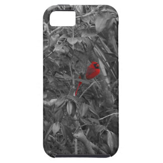 Cardenal en una caja del árbol iPhone 5 fundas