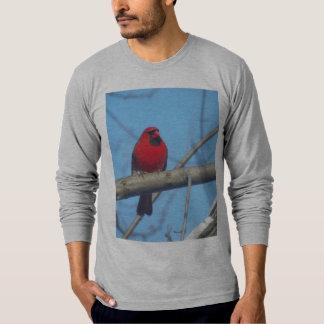 Cardenal/pájaro rojos playeras
