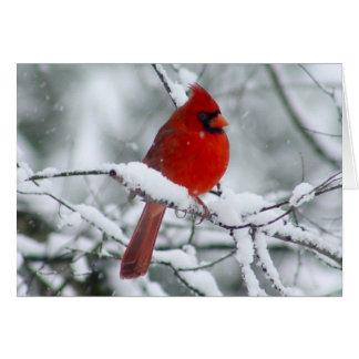 Cardenal rojo bonito en la tarjeta de la nieve