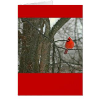 Cardenal rojo brillante en la rama de árbol photo felicitación