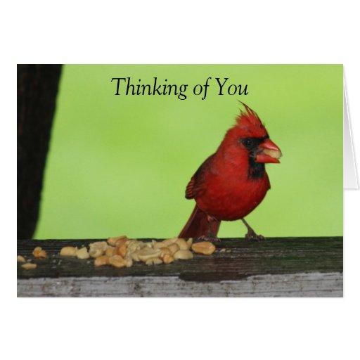 Cardenal rojo con la tarjeta de los cacahuetes