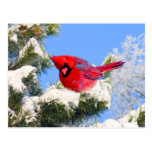 Cardenal rojo dulce en árbol nevado tarjetas postales