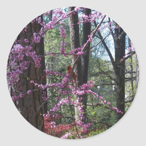 Cardenal rojo en árbol rosado etiquetas