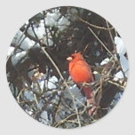 Cardenal rojo en arte cargado de la foto de los pegatina redonda