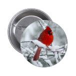 Cardenal rojo en el botón de la nieve pins