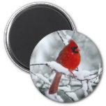 Cardenal rojo en el imán de la nieve