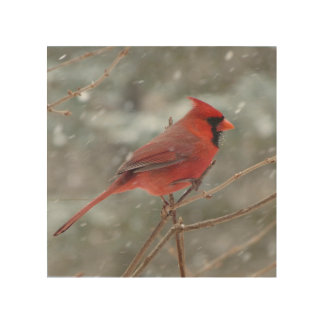 Cardenal rojo en invierno cuadros de madera