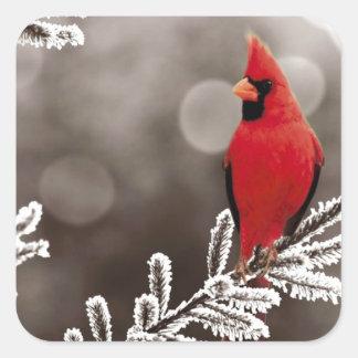 Cardenal rojo en invierno pegatina cuadrada