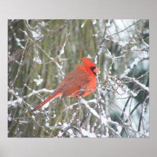 Cardenal rojo en invierno póster