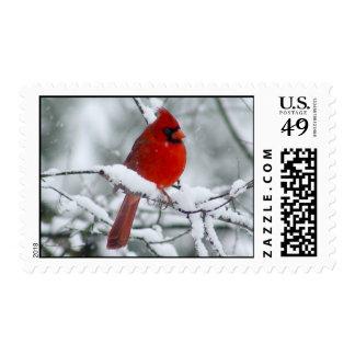Cardenal rojo en los sellos de la nieve