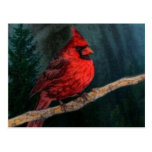 Cardenal rojo hermoso en el salvaje postal
