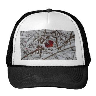 Cardenal rojo hermoso en un gorra llenado nieve de