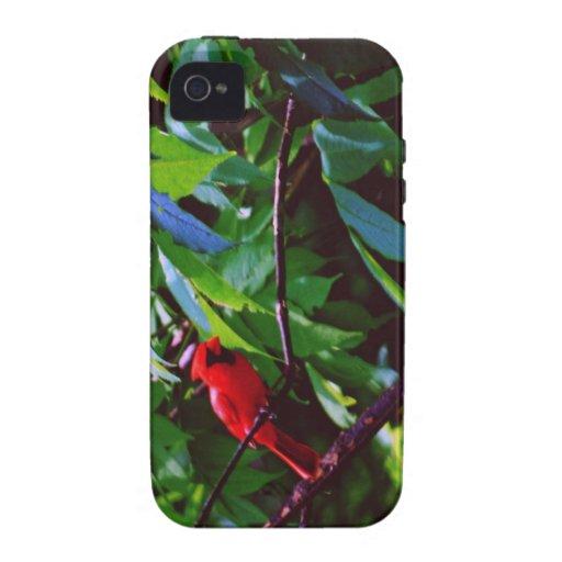 Cardenal rojo iPhone 4/4S fundas
