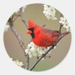 Cardenal rojo pegatina