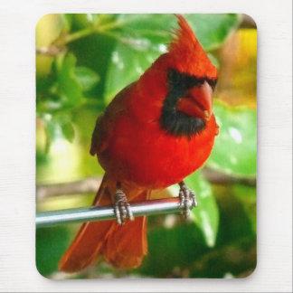 Cardenal rojo salvaje en Hawaii Alfombrilla De Ratones