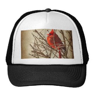 Cardenal rojo - textura de Brown Gorros