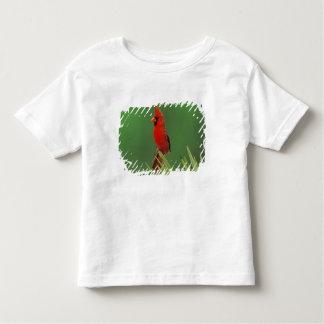 Cardenal septentrional, cardinalis de Cardinalis, T-shirt