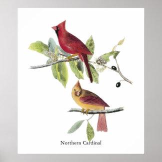 Cardenal septentrional de Audubon Posters