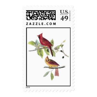 Cardenal septentrional de Audubon Sello