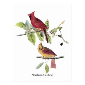 Cardenal septentrional de Audubon Tarjeta Postal