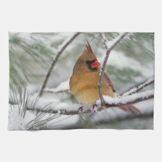 Cardenal septentrional de sexo femenino en árbol d toallas
