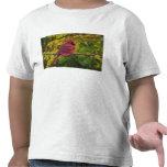 Cardenal septentrional de sexo masculino en el oto camisetas