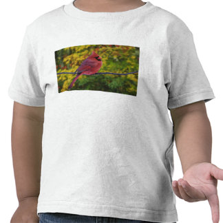 Cardenal septentrional de sexo masculino en el camisetas