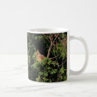 Cardenal septentrional en árbol de cedro taza de café
