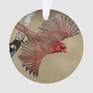 Cardenal septentrional en vuelo