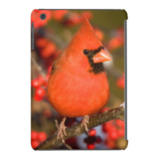 Cardenal septentrional en Winterberry común Fundas De iPad Mini